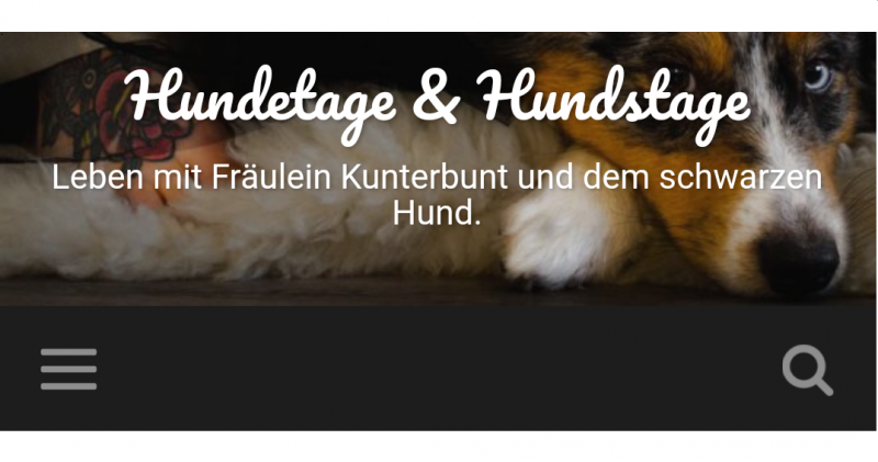 Blog Hundetage&Hundstage über test4pet, 24.8.17